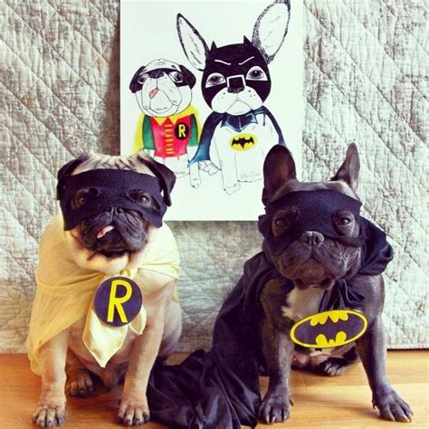 pug batman costume 15 frenchies who are winning at treats happen