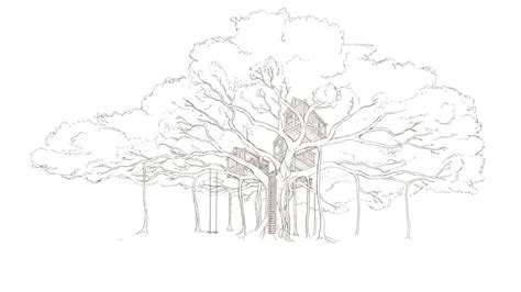 coloring pages of banyan tree banyan treehouse concept naomi vandoren