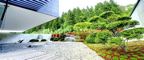 design garten ihr designgarten 187 luxurytrees 174 deutschland