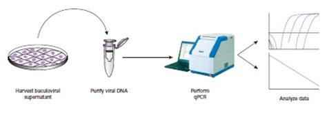 chip qpcr protocol figure 1 the bacpak qpcr titration kit protocol