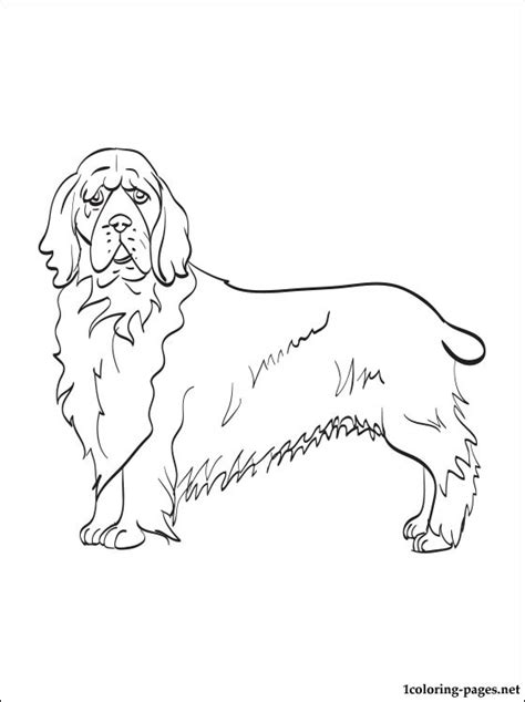 cocker spaniel coloring pages