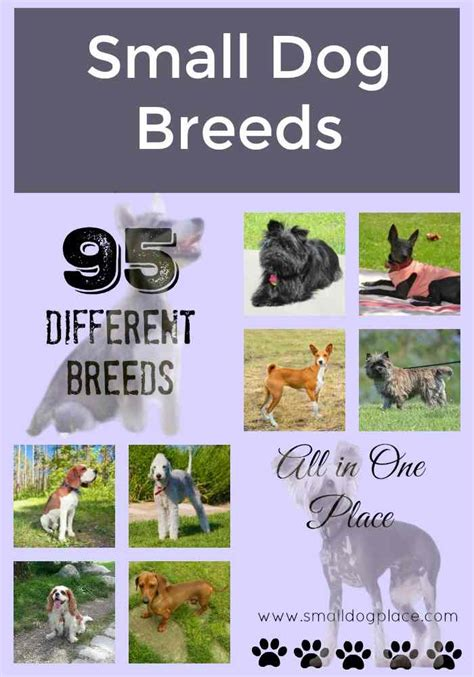 small breeds list all small breed list a to z with pictures descriptions