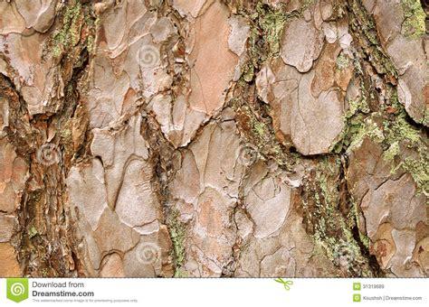 pine tree bark royalty free stock images image 31319689