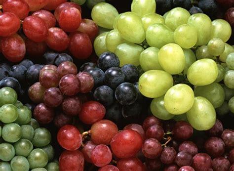 imagenes de los uvas kangris dieta de la uva 1001 consejos
