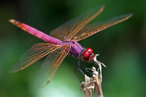 images of dragonflies wonderful photos how to photograph dragonflies