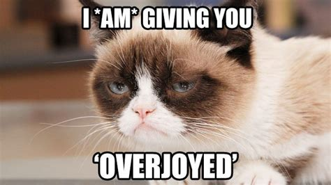 7 Fashion No Nos Ill Never Make by 7 Purrrfect Social Media Lessons From Grumpy Cat Audiense