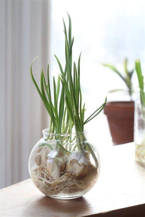 extend  gardening season veggies herbs   grow