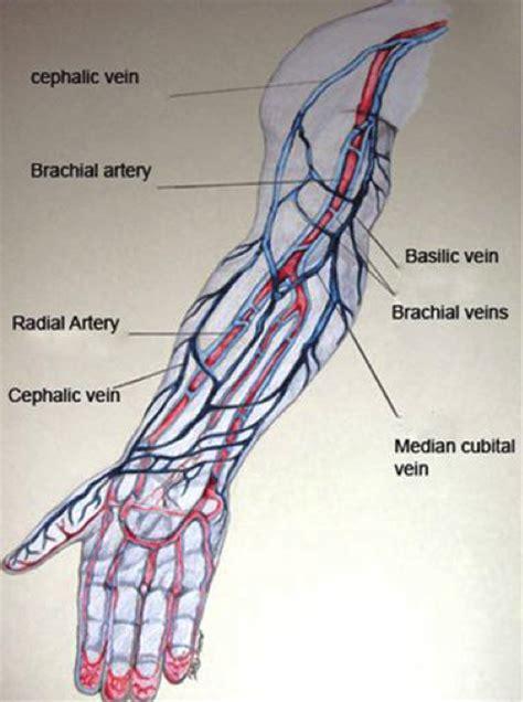 vein diagram of arm veins a career in phlebotomy through cnm