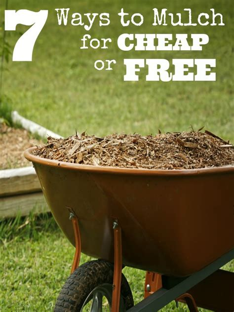 cheap mulch 7 ways to mulch for cheap or free
