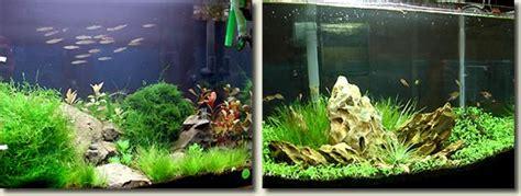 aquascape malaysia aquascape malaysia 28 images aquascape malaysia 28