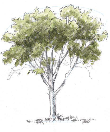 oak tree drawing 25 best ideas about oak tree drawings on pinterest tree drawings tattoo images and tree