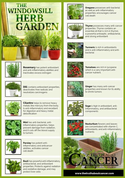 indoor herbal garden 7 infographics that ll teach you everything about growing