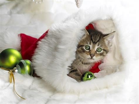images of christmas cats free christmas wallpapers christmas kitten wallpapers