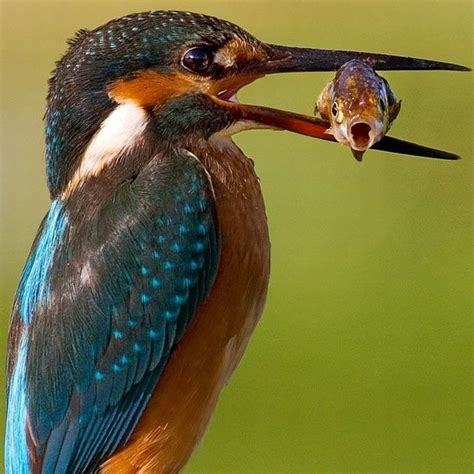 bird eat fish picture ebaum s world
