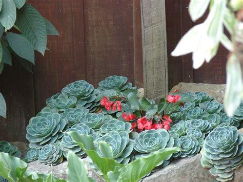 imagenes de jardines de sombra paisajismo pueblos y jardines plantas ornamentales