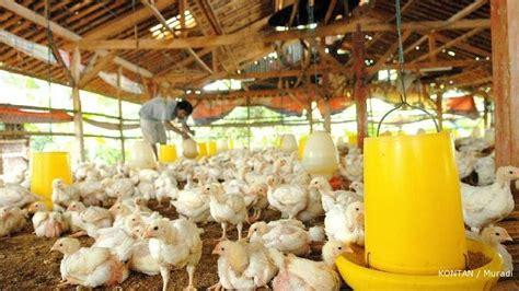 Distributor Pakan Udang Di Makassar ternak sapi bandung pakan ternak unggas