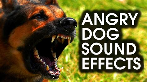 How To Keep Dog From Barking by Angry Dog Bark Amp Growl Sound Effects High Quality Youtube