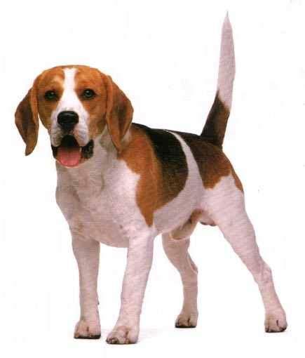 imagenes animales perros perros juanceron