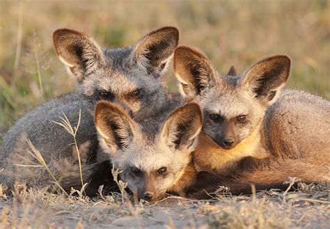animal group names - collective nouns for various animals Groupings Of Animals