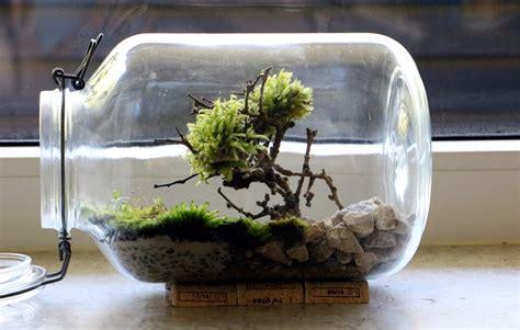 Ewiges Terrarium Bauen by Bonsai Moosbaum Terrarium Selber Machen