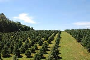 baltimore and central maryland christmas tree farms
