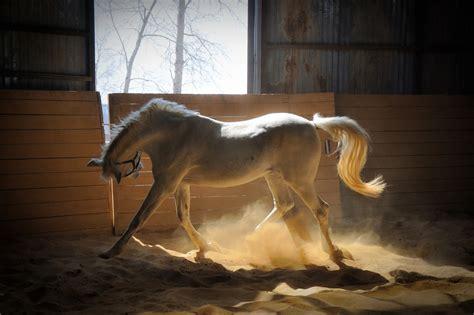 pferde stall bilder weissen pferd im stall pferde hd wallpaper
