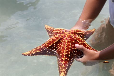 starfish images incredibly interesting facts about starfish