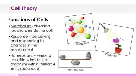 cell theory pattern and process cell theory lesson plan a complete science lesson using