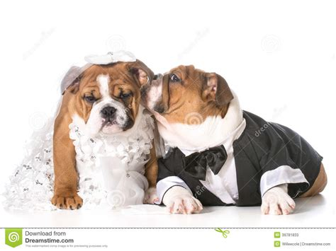 puppies and and groom stock photo image 39781833