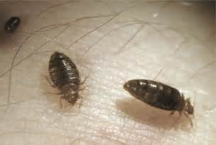 bed bugs move into cus libraries the sheaf the