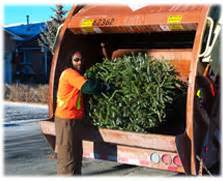 waste management christmas trees tree collection