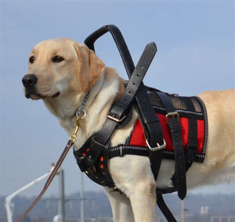 service dog housing laws service dogs for children with cerebral palsy birth injury justice