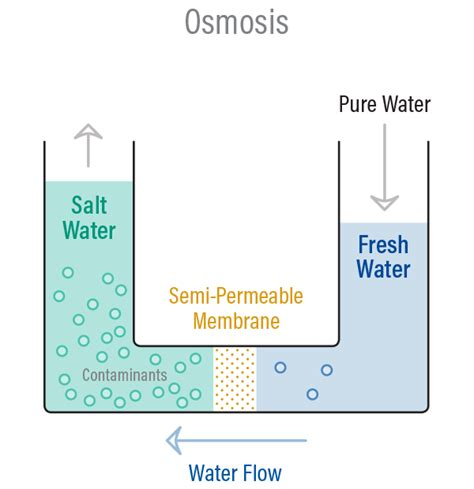 osmosis diagram osmosis related keywords osmosis keywords