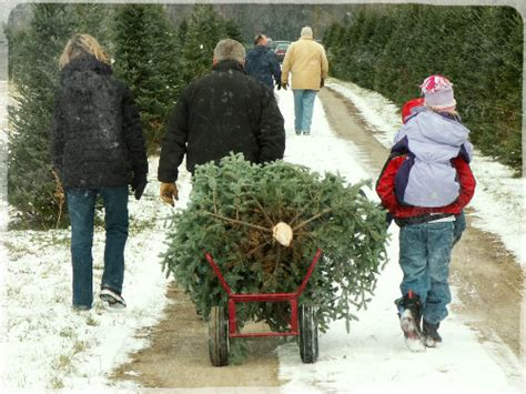 chester county pa christmas tree farms tree farms lots wilmington de