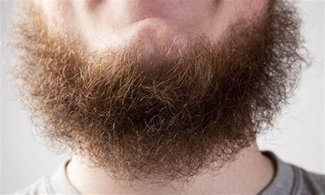 beard vs pubic hair trends what s so weird about beards richard carter comment