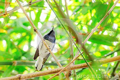 Bali United Birdies birds stock photo image 36214100