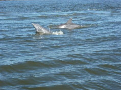 fan boat tour tybee island view from boat picture of captain mike s dolphin tours