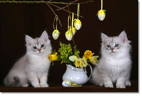 cat easter wallpaper easter cats