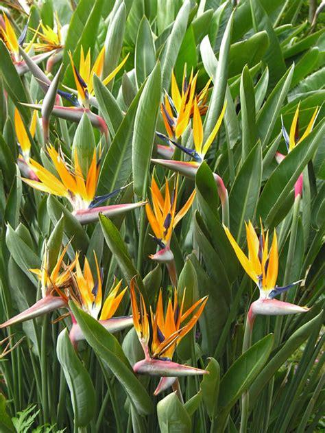 Glodok Lb By A D Bird les str 233 litzias le pouvoir des fleurs