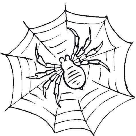 coloring pages insects and spiders free bug and insect coloring pages