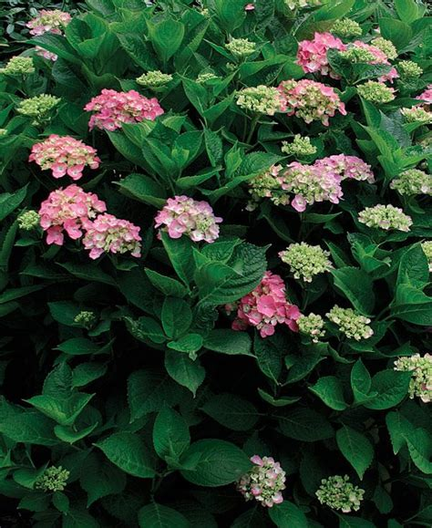 17 best images about outdoor and gardening on pinterest shade garden pruning hydrangeas and solar