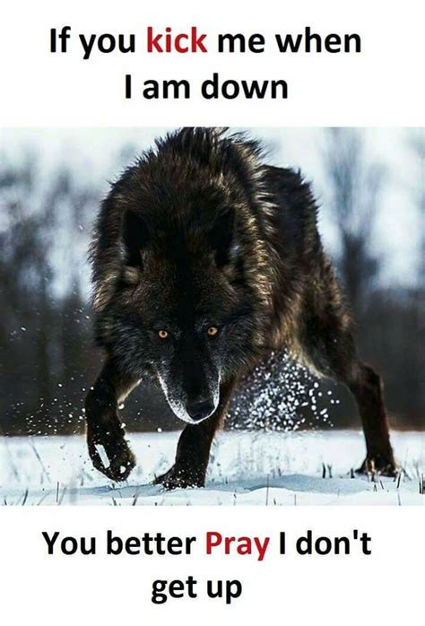 get up encouraging you to attack a marc hayford power book books best 25 wolf quotes ideas on lone wolf lone