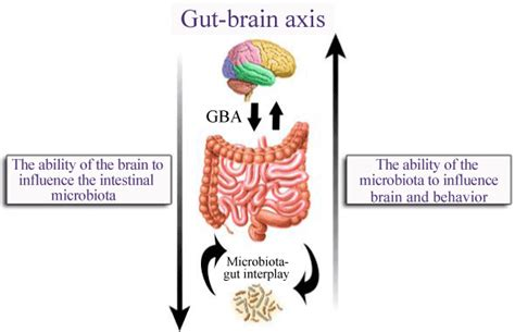 gut intelligence the wisdom to the the guts to do something about it books the reasons ibs health balance