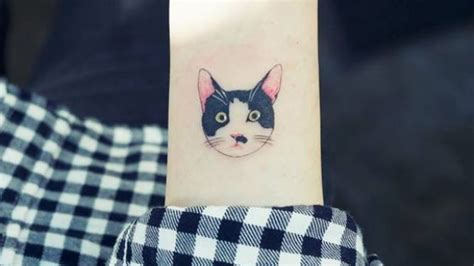 cat tattoo south korea korean cat ladies are getting illegal tattoos of their cats