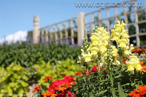 China Garden Orono by Cgstock Thumbnails Of Flowers Pictures