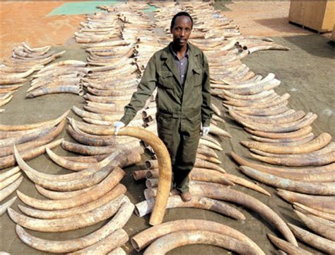 Guns N' Roses Drummer Says No To Ivory Trade - GirlieGirl ...