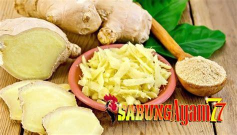 Obat Herbal Penambah Stamina Ayam Aduan stamina ayam aduan sabungayam77