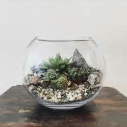 desert world terrarium small bioattic specialty plants