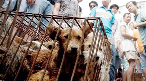 mass culling  dogs  china  woman dies  rabies