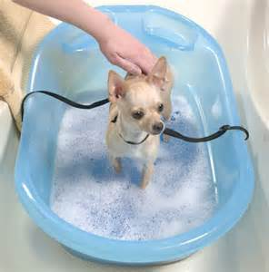 bathing bath time supplies pup tub at drs foster